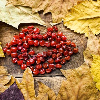 秋のリップ2大トレンド「ナチュラル」or「上品カラー」を失敗させないポイント!